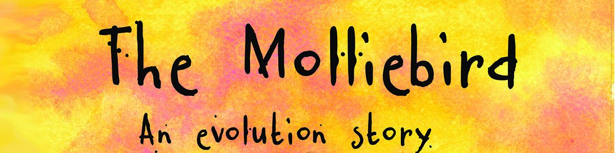 Molliebird_front_cover_FOR_HEADER_IMAGE.jpg